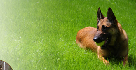 K-9 BSD: Dog Training with the K-9 Behavior Shaping Device